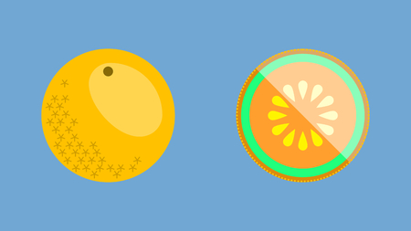 Cantaloupe melon or rockmelon whole and sliced in flat design vector style banner