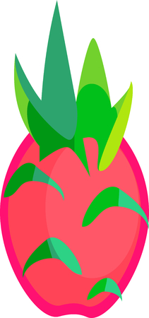Dragon fruit or pitaya fruit vector in flat design style isolated