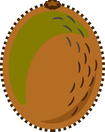 Kiwi fruit or kiwifruit vector in flat design style isolated
