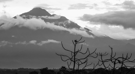 Tajumulco Volcano in Guatemala with bird silhouetted in a tree in black and white