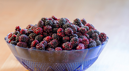 Bowl of wild blackberries in shades of deep red and black shot from overhead Stockfoto
