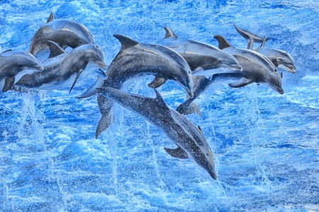 oceanic: Flying Dolphins