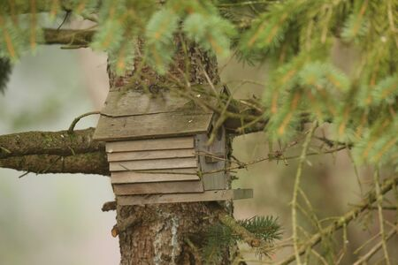 maison oiseau: Maison de l'Oiseau dans l'arbre Banque d'images