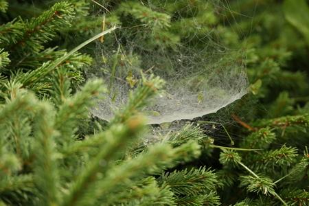 Spider Web Zdjęcie Seryjne