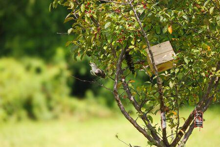 maison oiseau: Bird with Bird House