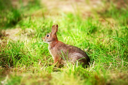 jack rabbit: Rabbit