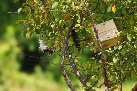 maison oiseau: Oiseau c�t� de Maison de l'Oiseau