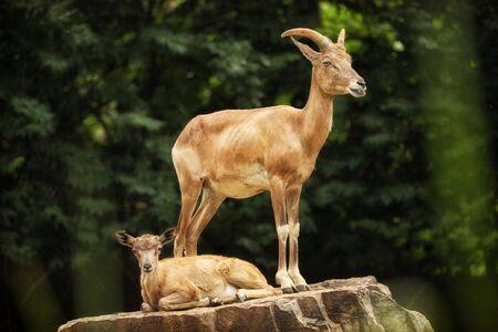 Antilope Standard-Bild - 43541523