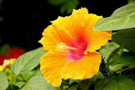 moon flower: Flower - Moon Stock Photo