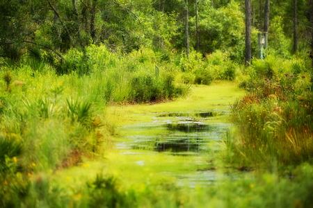 Nature Trail Stock fotó - 43541990