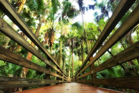 boardwalk trail: Nature Trail Boardwalk