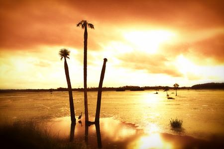 wetland: Early Moring Swamplands
