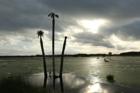 swamp: Florida Swamp Stock Photo