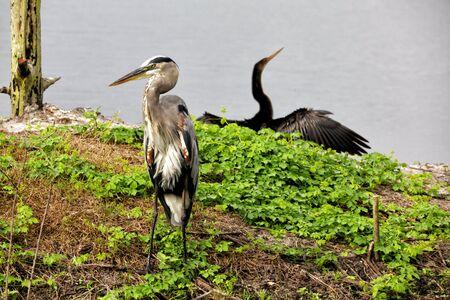 wetlands: Wetlands Birds Stock Photo