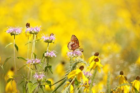 Butterfly fields Forever