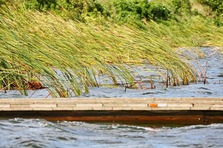 cattails: Boat Dock with Cattails