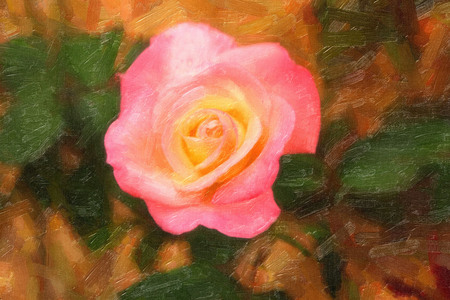 geen: Painted Pink Rose Stock Photo