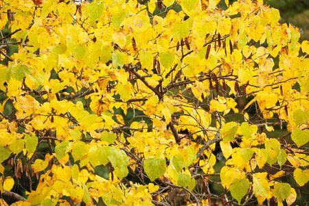 feuillage: Fall Foliage