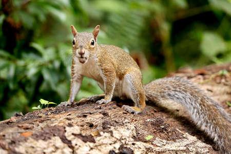 tree stump: Squirrel on Tree Stump
