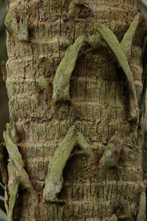 bark palm tree: Palm Tree Bark Pattern