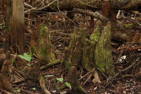tree stump: Old Tree Stump Stock Photo