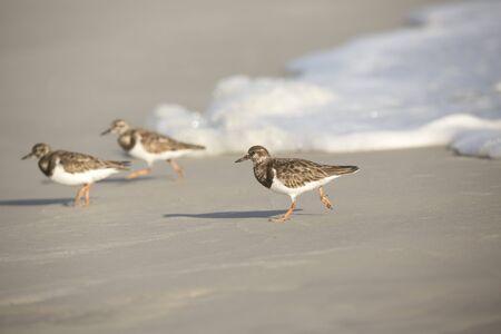 shore: Shore Birds