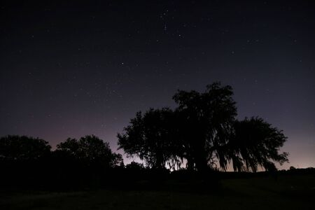 silhoutted: Silhoutted Tree at Night with Stars Stock Photo
