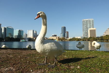 Swan and Lake Eola Orlando, Florida
