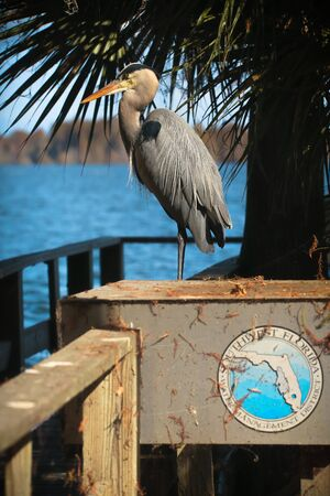 Great Blue Heron Perched in the Sun