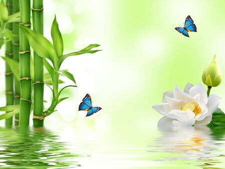 Bambù verde, ninfea bianca, farfalle blu, riflesso nell'acqua