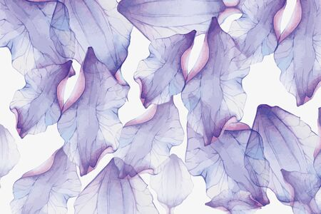 White background, large translucent purple leaves
