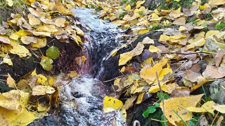 Autumn leaves on the grass, a small waterfall on a stream