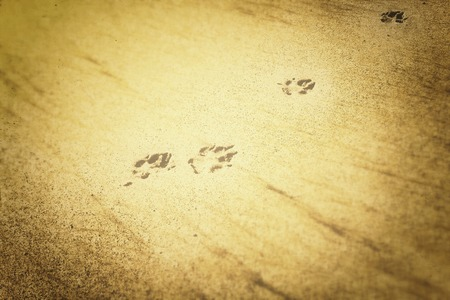 dog foot on the sand