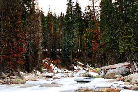 sequoia national park: snow in the forest at Sequoia national park, USA Stock Photo