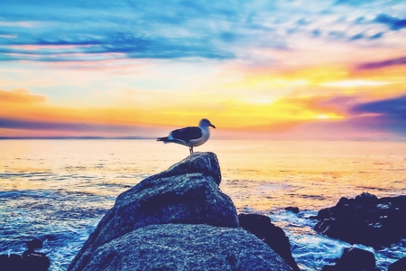 bird on the stone with ocean sunset sky background Stock Photo