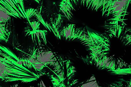 green palm leaves texture abstract background