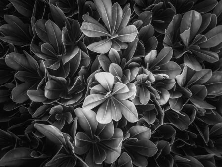 leaves texture background in black and white