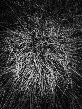 closeup grass texture in black and white
