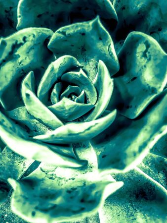 closeup green succulent plant texture abstract background Zdjęcie Seryjne