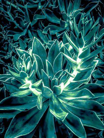 closeup green succulent plant texture background Zdjęcie Seryjne