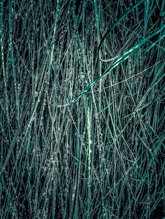 green silky grass texture abstract