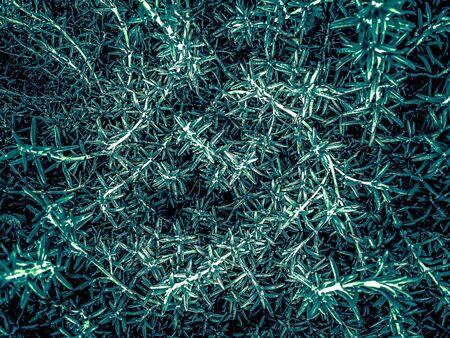 closeup green plant texture abstract