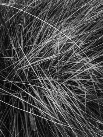 silky grass texture abstract in black and white