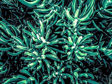 green succulent plant texture background