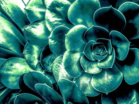closeup green succulent plant background Zdjęcie Seryjne