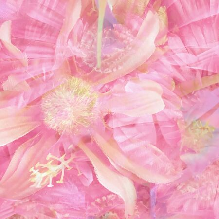 blooming pink daisy flower abstract background