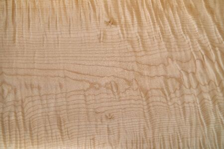 Sycamore maple texture. Sycamore maple veneer in workshop. Close-up
