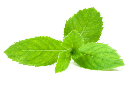spearmint: Leaf spearmint on white background