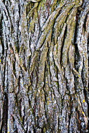 Texture bark Stock Photo - 19411385