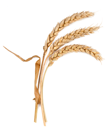 spikelets isolated on white background